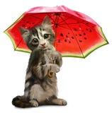 A vaquinha guarda um guarda-chuva vermelho Imagens de Stock Royalty Free