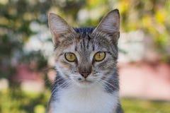 VAQUINHA O CAT imagem de stock royalty free