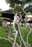 Vaquinha pequena que escala uma árvore Foto de Stock
