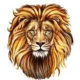 Varón del león, aslan stock de ilustración