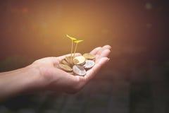 Varón que sostiene monedas de oro del dinero con la planta en su mano imagenes de archivo