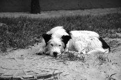 var den tröttade hunden Royaltyfri Fotografi