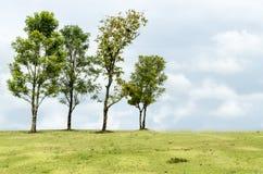 Var det olika trädet Fotografering för Bildbyråer