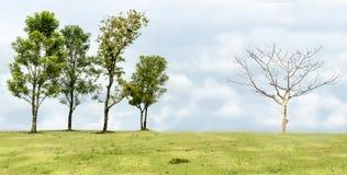 Var det olika trädet Arkivbild