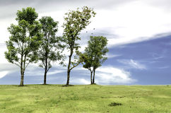 Var det olika trädet Royaltyfri Foto