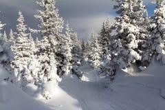 var färdigt lycklig hör I, om bildberg tackar använt var vintern skulle dig Arkivbilder