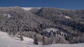 var färdigt lycklig hör I, om bildberg tackar använt var vintern skulle dig Snö-täckte träd för vinter skog i bergen blå sky lager videofilmer