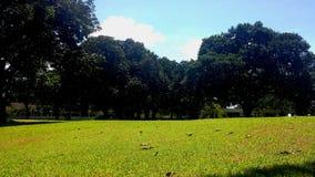 Var gräset är mer grön Arkivfoton