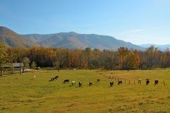 Var hästar kan säkert beta Fotografering för Bildbyråer