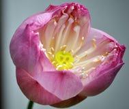var min valentin Royaltyfria Bilder