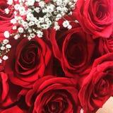 Var min valentin? Royaltyfria Bilder