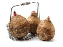var redan kan lagade mat olika berömda matar för århundraden porslinet som guangxien har historia många närande planterad produce arkivfoton