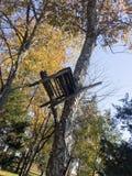 Var stolen som byggdes runt om trädet Royaltyfria Foton