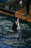 vara belönad delfin Arkivfoto