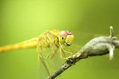 Vara da libélula em um tronco fotos de stock