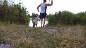 Vara de lances do homem novo a seu cão no lago Labrador ou golden retriever que vão buscar a vara de madeira da água filme