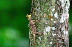 Vara do lagarto de voo em uma árvore foto de stock
