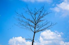 Vara dos pássaros na árvore seca Fotos de Stock Royalty Free