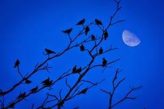 Vara dos pássaros na árvore seca Foto de Stock