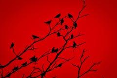 Vara dos pássaros na árvore seca Imagens de Stock