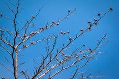 Vara dos pássaros na árvore seca Fotografia de Stock Royalty Free