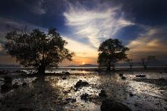 Silhouette av treen och solnedgången på tyst strand Arkivbild