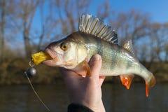Vara na mão do ` s do pescador Fotos de Stock