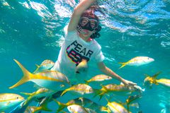 Child boy snorkeling in Cuba stock images