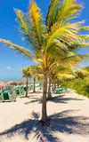 Varadero beach in Cuba with a coconut tree. View of Varadero beach in Cuba with a coconut tree, umbrellas and beach beds Royalty Free Stock Photography