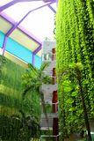 Varadero, Cuba, January 1, 2014:  Hotel with hanging green  plants Royalty Free Stock Photography