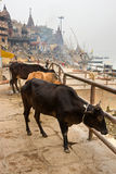 Varanasi (Benares). View of varanasi, Uttar Pradesh, India Royalty Free Stock Photography