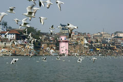 Varanasi city in India. With a flock of birds flying over the Ganges river in the foreground Stock Image