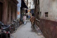 Varanasi, India Stock Foto's
