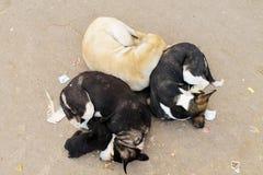 Varanasi-Schlafen Ddgs Stockfotografie
