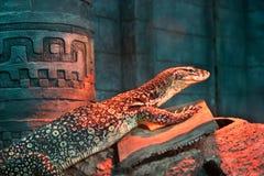 Varanus Acanthurus am Zoo Lizenzfreies Stockfoto