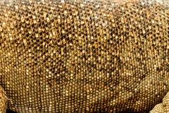Varanus bengalensis. Texture of skin varanus bengalensis, animal background stock photos
