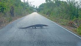 Varanus kruipt langzaam op de weg, concentreert selectief royalty-vrije stock fotografie