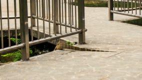 Varanus Walks across Stony Bridge by Metal Rails in Park. Varanus salvator large water monitor lizard walks across stony bridge between metal rails in park stock video footage