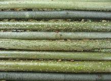 Varas côr de avelã Fotografia de Stock