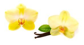 Varas da baunilha com flor fotos de stock