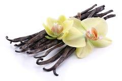 Varas da baunilha com uma flor. Fotografia de Stock Royalty Free