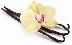 Varas da baunilha com uma flor. Imagem de Stock