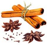 Varas de canela e anis de estrela isolado ilustração stock