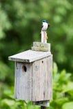 Varas de uma toutinegra do azul sobre um aviário fotos de stock