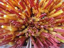Varas vermelhas do incenso e velas amarelas em um templo budista Imagem de Stock