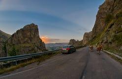 VARDZIA, GEÓRGIA - 6 DE AGOSTO DE 2017: Vacas na estrada da montanha - d Foto de Stock Royalty Free