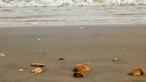 Vare la arena con las olas oceánicas que ruedan suavemente hacia cáscaras del mar en orilla almacen de video