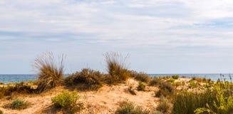 Vare las dunas en el sol, escena de la playa con el espacio de la copia, dunas de arena Foto de archivo