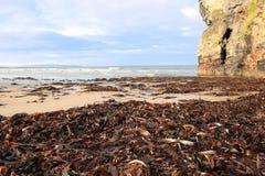 Varech de mer de falaise de plage de Ballybunion Images libres de droits