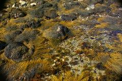 Varech jaune et brun d'abstrait - photos stock